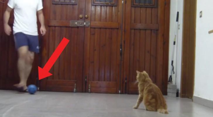 Da qui non si passa: l'abilità del gatto portiere è eccezionale!