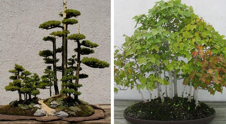 La tradition ancienne des forêts bonsaï: voici 15 exemples magnifiques
