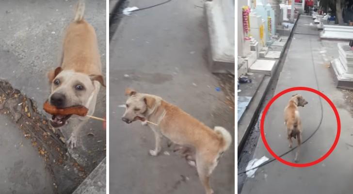 Cette chienne demande à manger à un passant : regardez où elle va quand elle en a