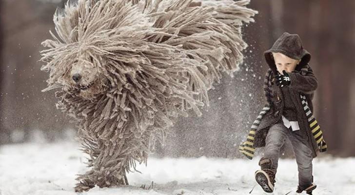 Foto che fanno sognare: godetevi questo gigante peloso che gioca col suo piccolo amico