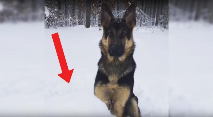 Zijn baasje gooit de 'bal': de zoektocht van de hond is standvastig en... grappig!