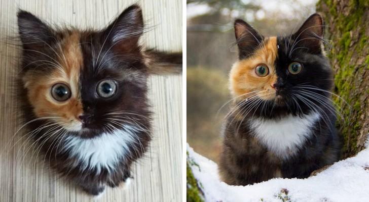 Quando madre natura finisce l'inchiostro: ecco a voi una gattina dalla colorazione unica