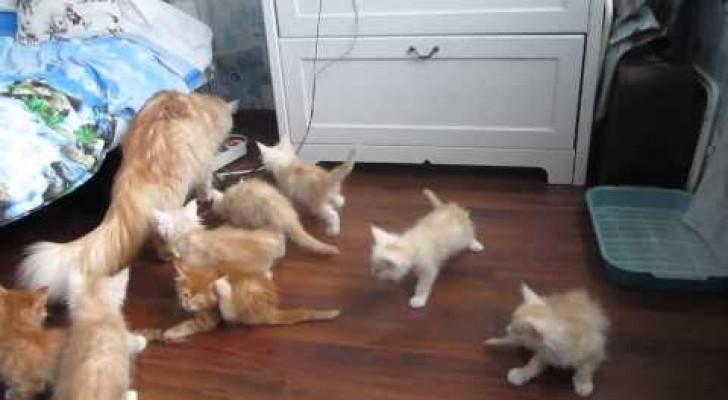 Weg hier, Catbomb im Anmarsch!