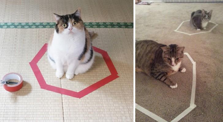 Tutti dentro al cerchio: ecco l'ossessione a cui nessun gatto sembra poter resistere