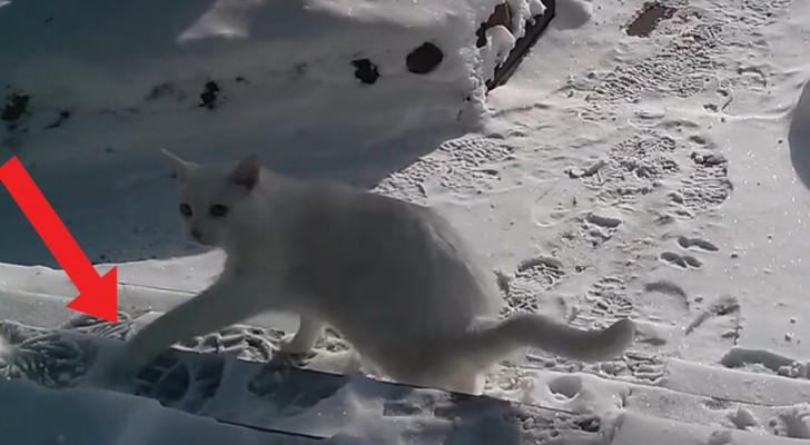Deze kat zet voor de eerste keer zij  poten in de sneeuw... en hij snapt er NIETS van!