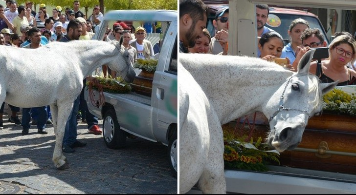 A horse gives a tearful farewell to its deceased owner ...