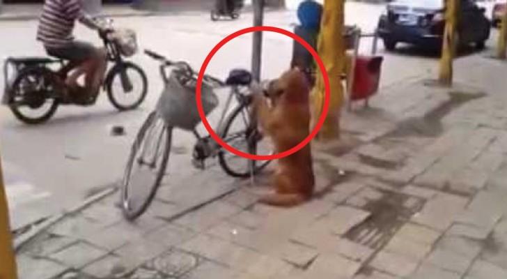 Il cane fa la guardia alla bicicletta ma è quando torna il padrone che viene il bello!