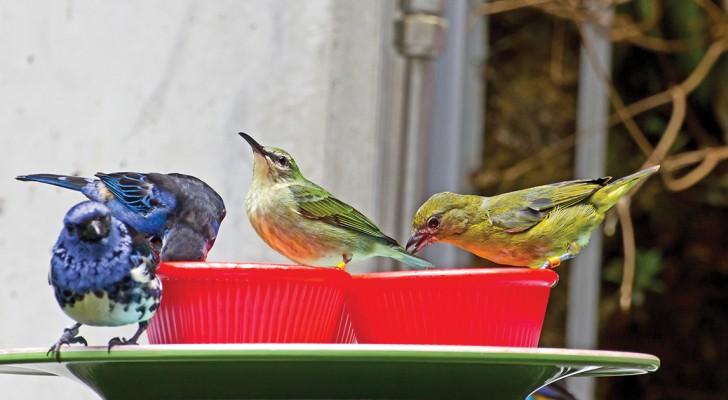 Wil Je Vogels Helpen Overleven In De Winter? Lees Hier Waarom Je Ze GEEN Brood Mag Geven
