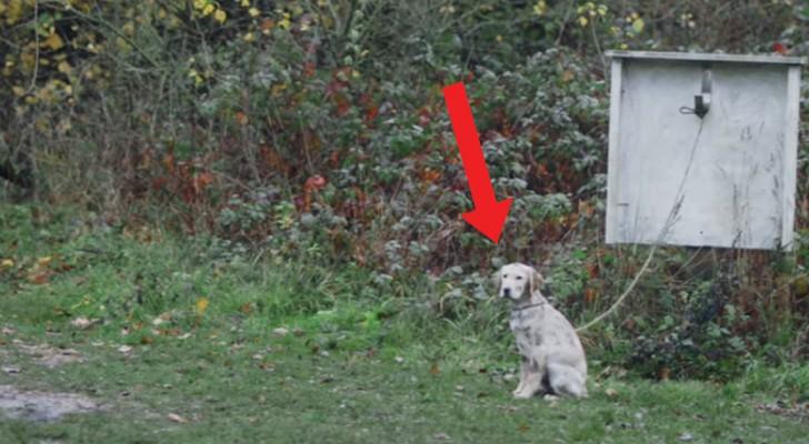 Un enfant aperçoit un chien abandonné : à ce moment, sa vie va changer pour toujours