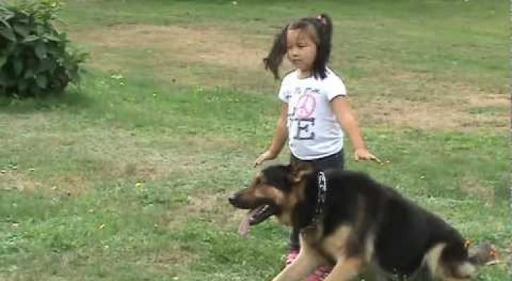 Der Schäferhund beschützt sein kleines Frauchen