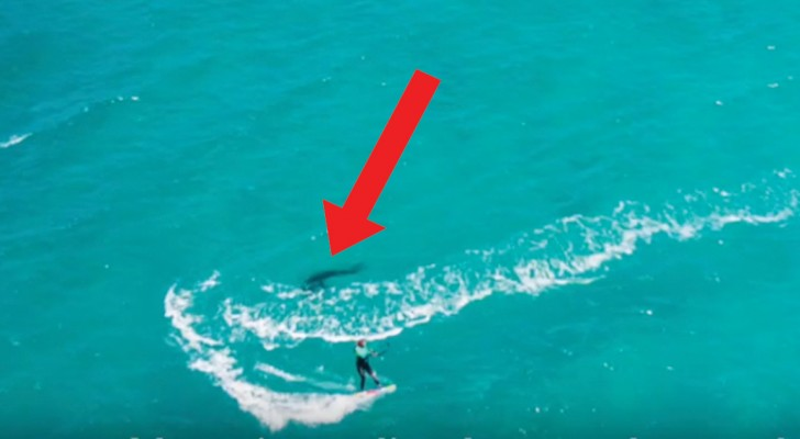 Han filmar sin tjej som surfar med en drönare, men sedan så lägger han märke till en svart fläck i vattnet ...