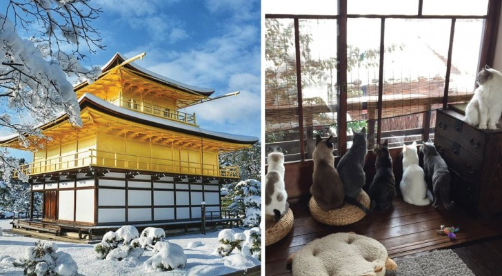 Una nevicata senza precedenti ricopre l'antica capitale del Giappone: ecco Kyoto in vesti eccezionali