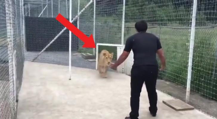 Dice alla donna di aprire il cancello: quello che avviene fra lui e la leonessa è impressionante