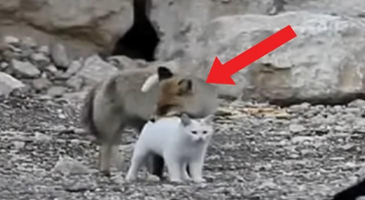 Un'insolita coppia si aggira per la spiaggia: gatto e volpe sono i protagonisti di un legame speciale