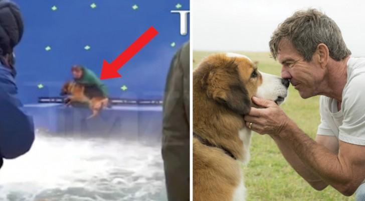 'Qua la zampa': un video denuncia il maltrattamento del cane ma è davvero andata così?
