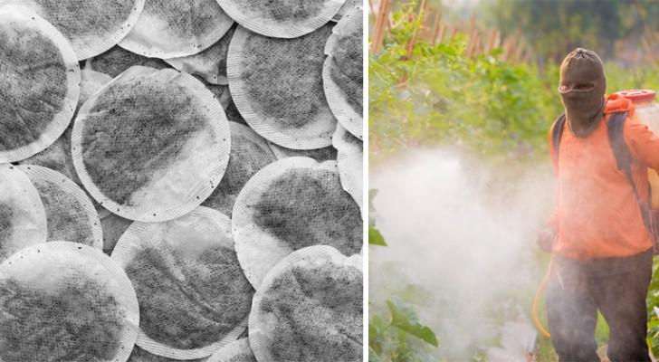 giftige stoffen in je thee: uit onderzoek blijkt welke merken de minste pesticiden bevatten