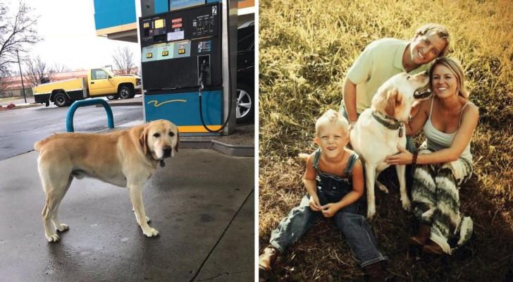 Si avvicina al cane credendolo smarrito: il messaggio sulla targhetta gli strappa un sorriso