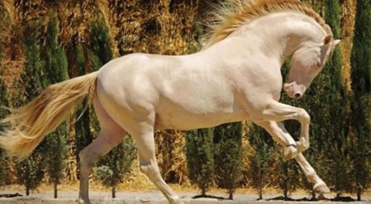 21 chevaux majestueux devant lesquels on ne peut que s'émerveiller