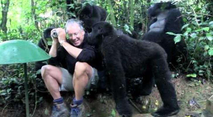 Un uomo va nella giungla per fotografare i gorilla, ma vivrà un'esperienza impossibile da dimenticare