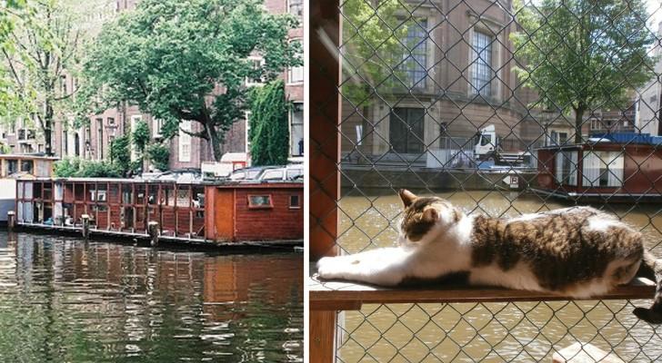 Ontdek deze drijvende structuur in Amsterdam die speciaal is bedoeld voor het opvangen van de zwerfkatten van de stad!