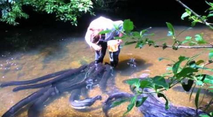 Mujer valiente alimenta las anguilas