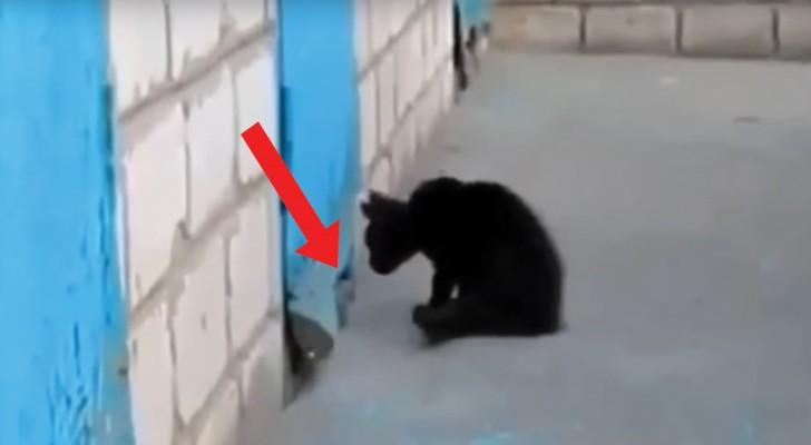 Um gatinho vê o focinho de um cachorro que estava preso e abandonado: veja como uma brincadeira se transformou em um salvamento