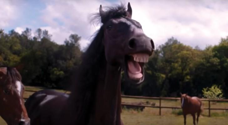 Esta publicidade vai ser o vídeo mais divertido do dia: impossível não rir!