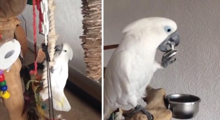 Ze vertelt haar kaketoe dat het tijd is voor een snack: de manier waarop hij van zijn yoghurt snoept is schattig!