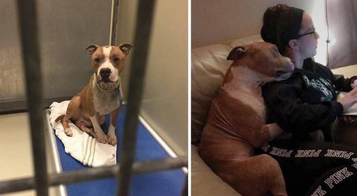 Sie sieht einen traurigen Pitbull in einem Käfig: das Foto nach der Adoption ging um die Welt