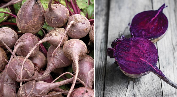Prodigieuse betterave: l'aliment aux nombreuses propriétés bénéfiques à redécouvrir