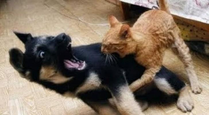 Cani spaventati dai gatti