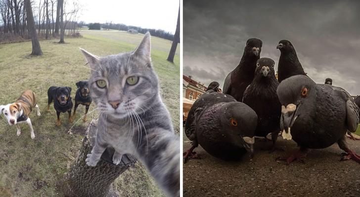 Dieren poseren net als bandleden op foto's die ALBUMHOESWAARDIG zijn