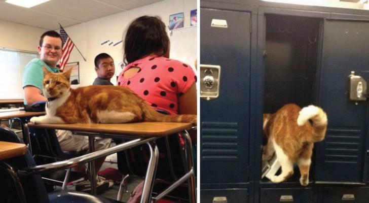 Vi presentiamo bubba il gatto che ama andare a scuola pi for Sognare che il tuo ragazzo ti lascia per un altra