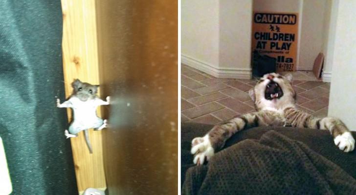 Onze dierenvrienden spelen de hoofdrol in deze Hilarische incidenten