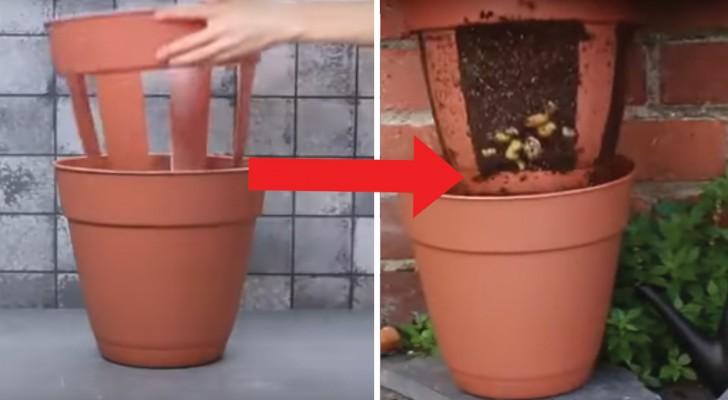 Coltivare le patate in balcone ecco il trucco per farlo for Vasi per semina