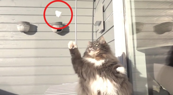Giocare a palle di neve? Questo gatto lo sa fare meglio di voi!