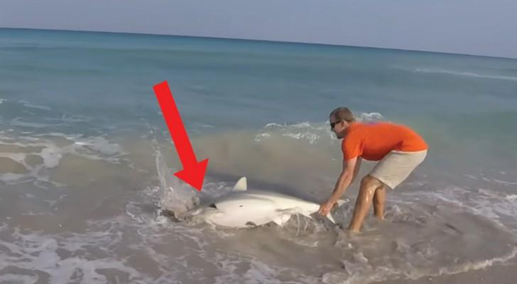 Avvista uno squalo in difficoltà e non esita ad afferrarlo con le mani: il suo intervento è eroico