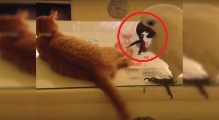 Een papegaai en zijn strijd om de staart van de kat: dit is het grappigste spel dat je ooit hebt gezien!