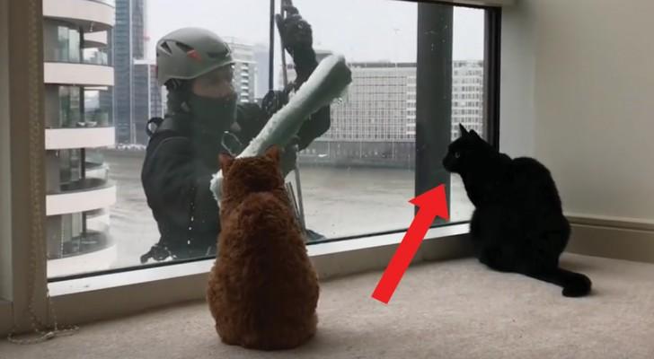 Quando arriva l'uomo che pulisce le finestre questo gatto reagisce sempre allo stesso modo!