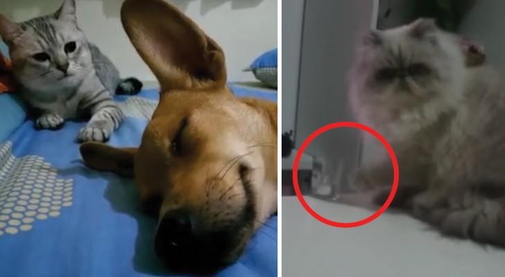 Gatti dall'attitudine difficile: ecco le scene più CATTIVE catturate in video