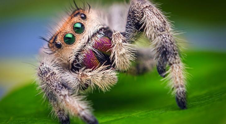 Il predatore perfetto: i ragni consumano prede per 800 milioni di tonnellate l'anno