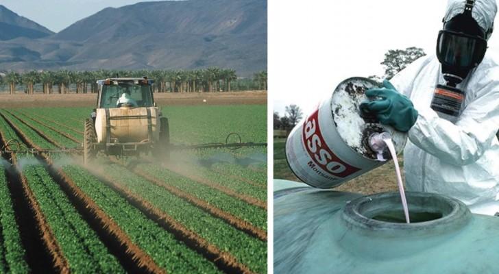 200 000 morts à cause des pesticides, mais les gens préfèrent encore le beau au sain