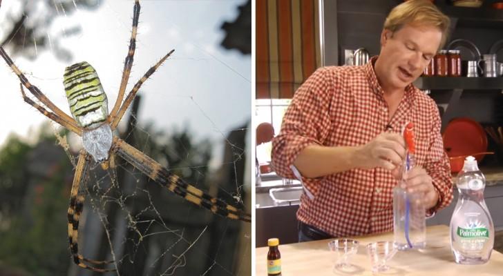 Tienes terror a las arañas? Aprende como tenerlas lejos de casa sin usar productos quimicos