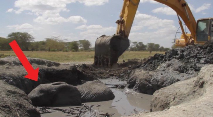 An elephant stuck in a mud pit is rescued from certain death!