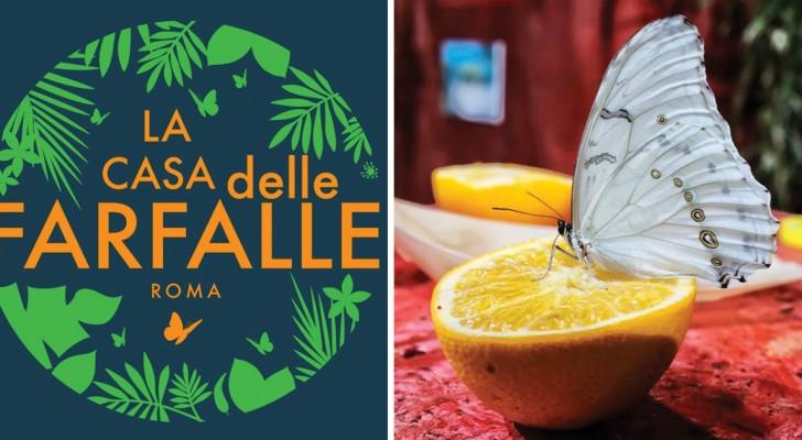 Apre a Roma la Casa delle Farfalle: tutte le info per visitare questo posto magico nel cuore dell'Appio-Pignatelli