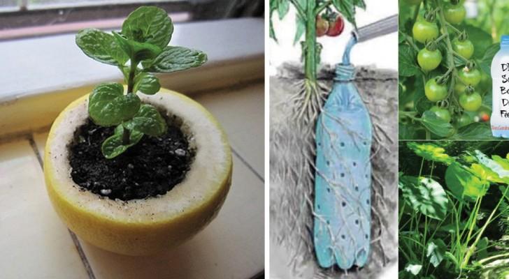 10 trucchi di giardinaggio che vi faranno diventare esperti del verde