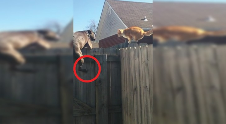 Als een hond probeert zich als een kat te gedragen... gebeurt er dit!