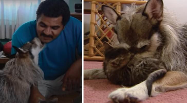 Ginny, il cane che salva i gatti insieme al padrone. Ecco la bellissima storia di una coppia di eroi