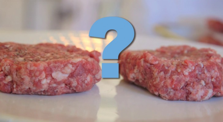 Vlees gekweekt in het lab: hoe kunnen we mogelijk van veeteelt overstappen naar deze nieuwe vorm?