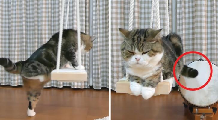 Tra come sale sull'altalena e il modo di suonare il tamburo, questo gatto è un campione di simpatia